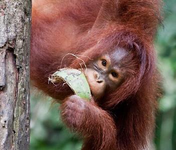 Borneo 2009